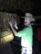 Dave checks out tobacco in the LFD curing barn. Here tobacco changes from green to brown over a few weeks.